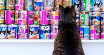 Качественный рейтинг кормов для кошек 2019